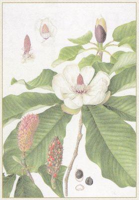 Flora05