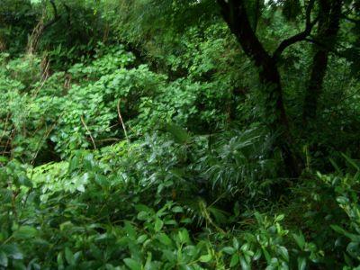 Tamagawa01bblog